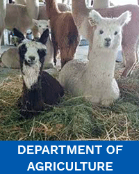 Dept-of-Agriculture-WebFM-Project